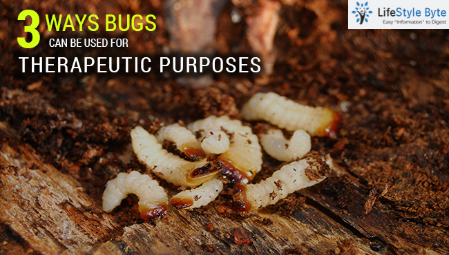3 ways bugs can be used for therapeutic purposes