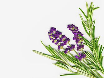 lavender-and-rosemary-isolated-on-white_zykmrpd_