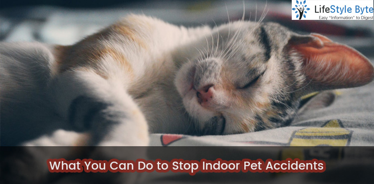 what you can do to stop indoor pet accidents
